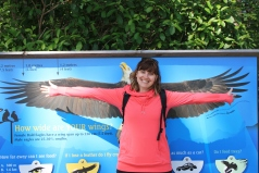 Eagle wing span 1 - Shannon wing span 0